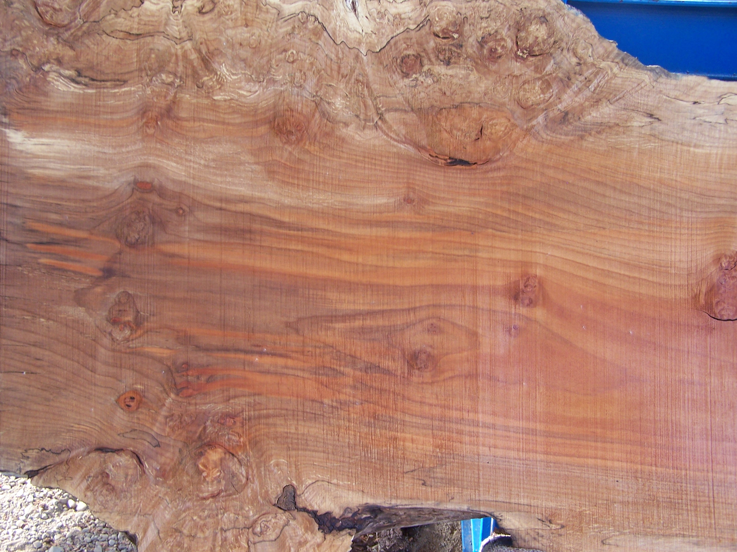 Maple Slab Close