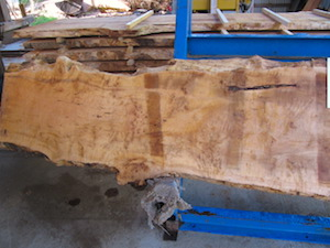 Maple slab 6060a