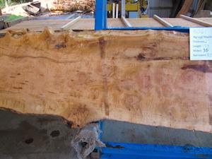 Maple slab 6061a
