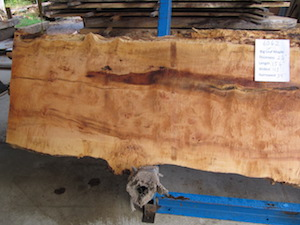 Maple Slab 6062a