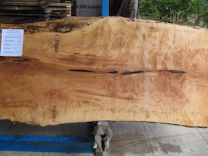 Maple Slab 6062b